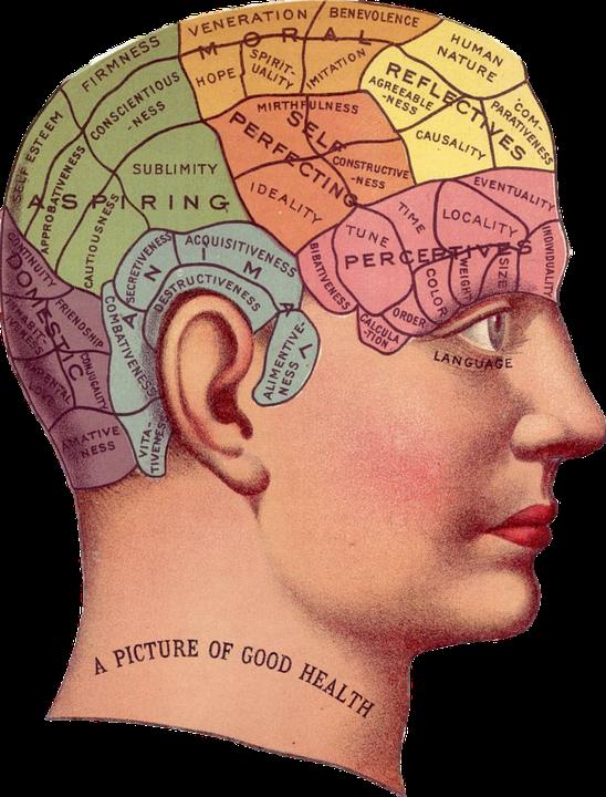 Qu'est-ce qu'il y a dans le cerveau ?