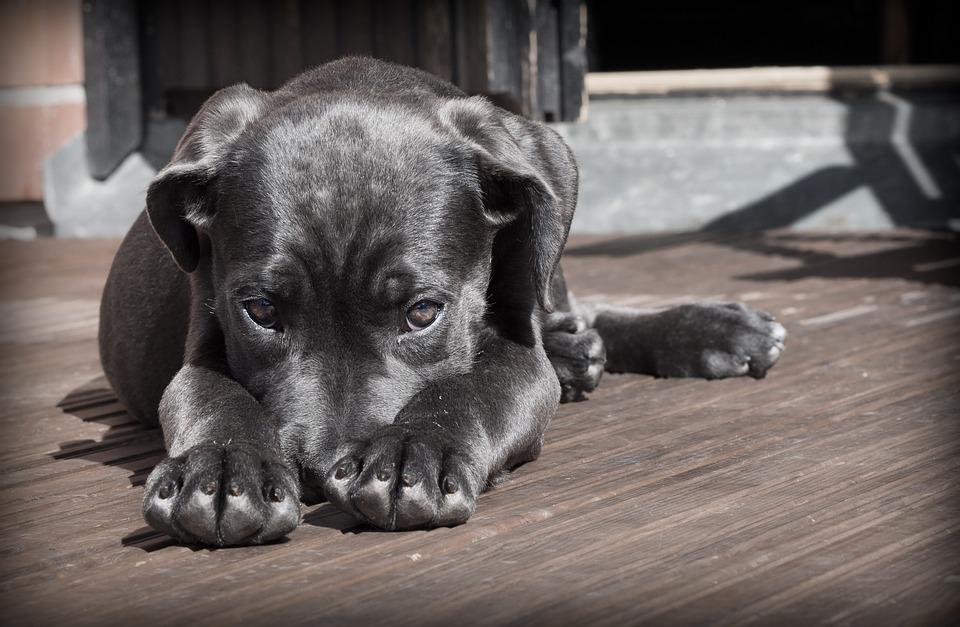 Informations sur la formation des consultants en comportement canin